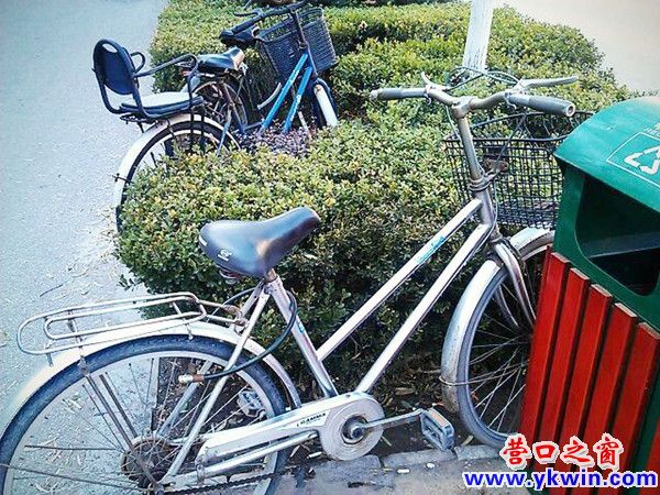 自行车乱停 草丛成灾区