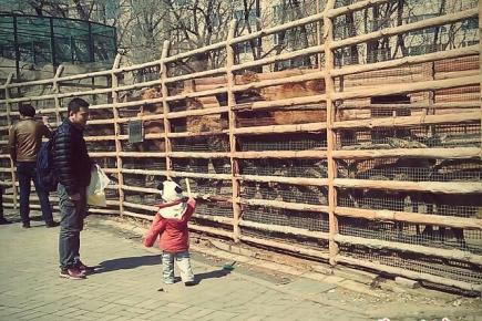 人民公园动物园 春日休闲好去处