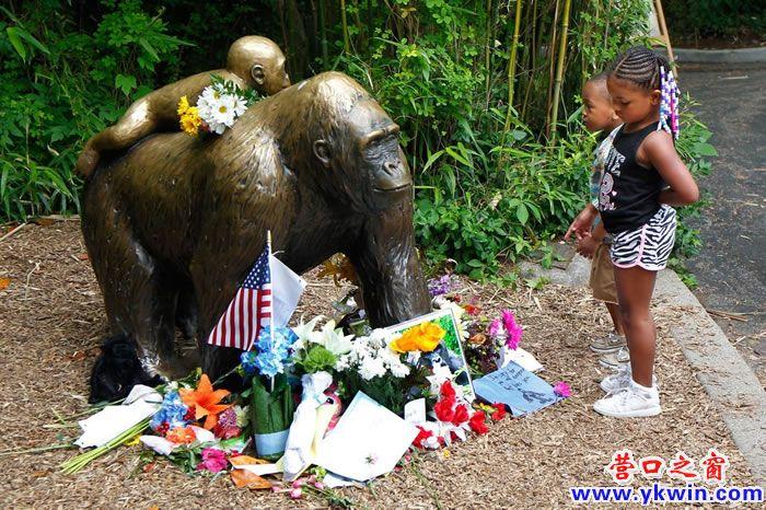 小男童坠入大猩猩园区内,最终后者遭射杀。图为案发几天后,孩童在辛辛那堤动物园盯着母猩猩背着小猩猩的雕像瞧。 / PHOTOGRAPH BY JOHN SOMMERS II, GETTY IMAGES (神秘的地球uux.cn报道)据美国国家地理(撰文:Jason Bittel 编译:郑惟心):最近两则动物相关新闻,从动物园大猩猩到野生鳄鱼,不管您怎么看待,先听听专家说法吧! 如果你已当上了爸妈,最近传出的动物相关新闻,也许会让你不寒而栗。 前几天在佛州奥兰多迪士尼渡假村饭店附近,一名两岁男童遭短吻鳄拖入