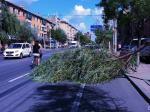 营口:狂风肆虐  树木折腰