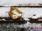 立冬营口下雪啦