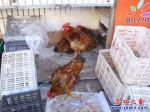 路边超市卖活鸡迎鸡年