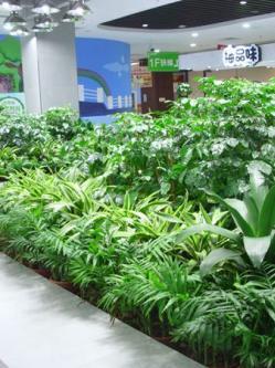 这家超市有个植物园