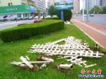 营口市渤海大街绿化带围栏即将更新