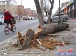 公园路边枯树倒 亟待为它找归宿