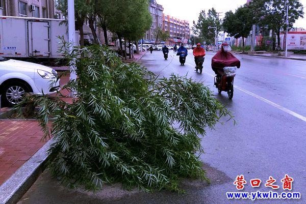 雨天树木易倒伏,请注意安全!
