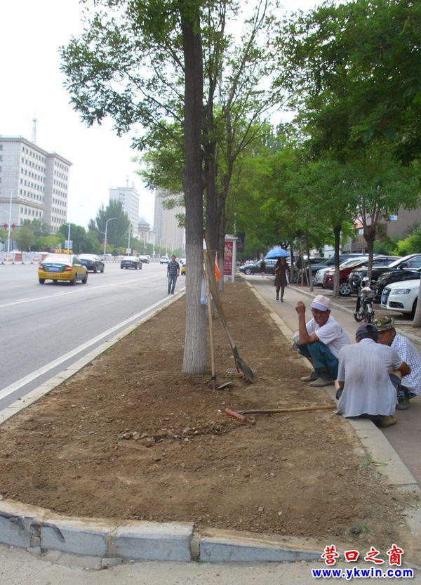 营口市渤海大街绿化带回到荒漠带