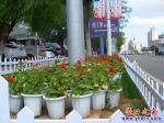 营口市渤海大街边绿化带又美了起来