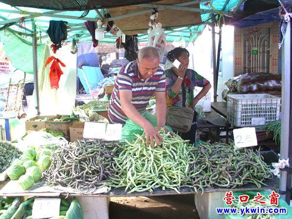 营口市青菜价格大幅度回落恢复常态