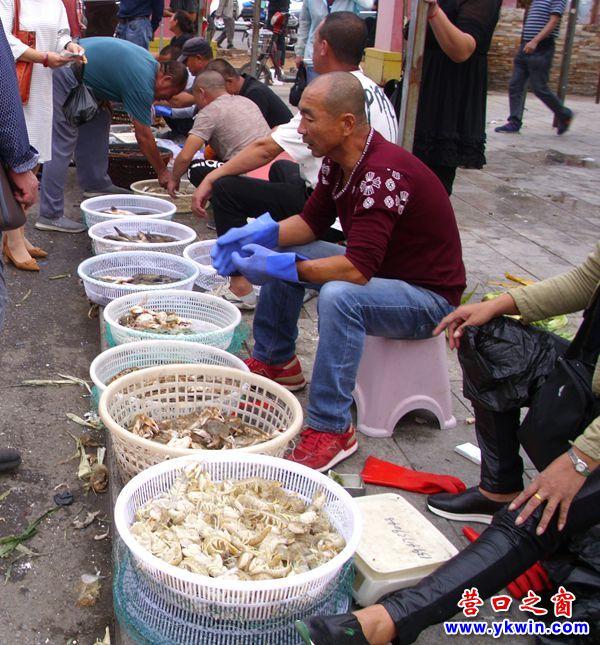 今年,营口虾爬子稀缺赤甲红和飞蟹充足