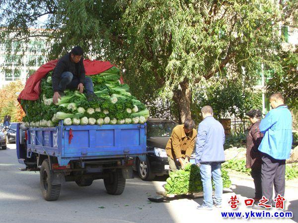 营口市部分白菜萝卜大葱亮相售价同比略高