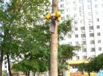 九棵木棍不翼而飞 3棵小树失去支撑