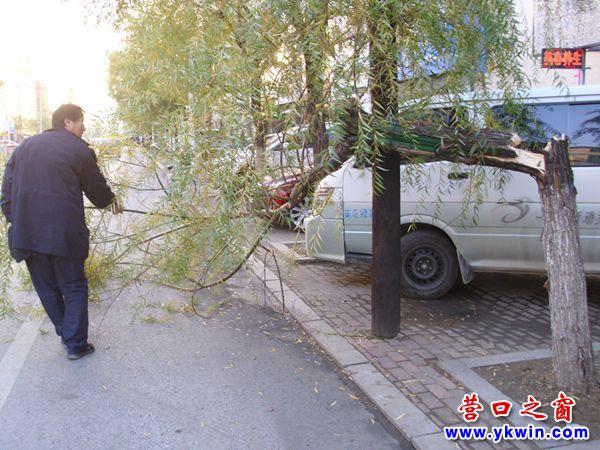 这棵柳树在初冬夭折