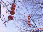 公园景观细梳妆  高挂灯笼迎新春