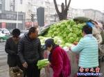 秋白菜安全过冬 春天上市受欢迎