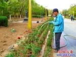 营口楞严寺公园中轴线两旁增开月季花