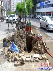营口市府路边的水泡小树有救了