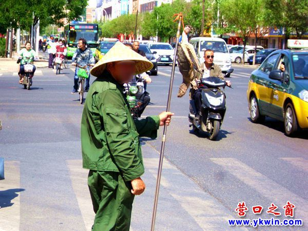 盼盼路边卖河龟 谁是河龟新主人