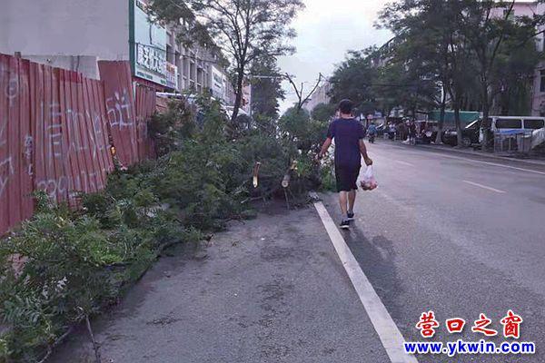 樹枝堵在人行道   行人有路不能走