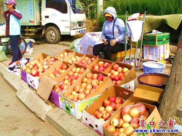 营口市部分大寒富苹果只卖一元