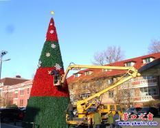 """营口国际酒店门前""""栽""""了一棵特大圣诞树"""
