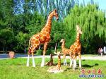 营口市人民公园新增了八种不会动的动物