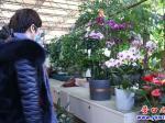 营口:花卉飘香迎新年