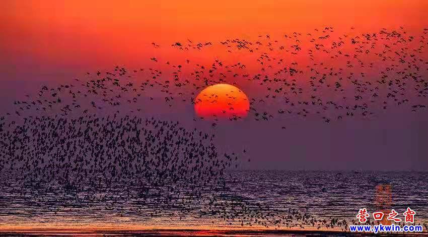 营口西海岸鸟浪