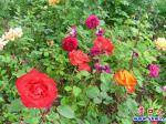营口市渤海大街将镶上更美的花边