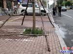 营口新华路:绊人的行道树支撑架已缩回