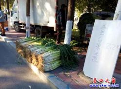 营口市大菜市:大葱萝卜贵白菜稀